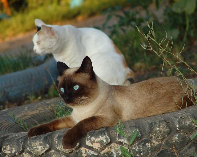 Grooming Γάτας Door2pet