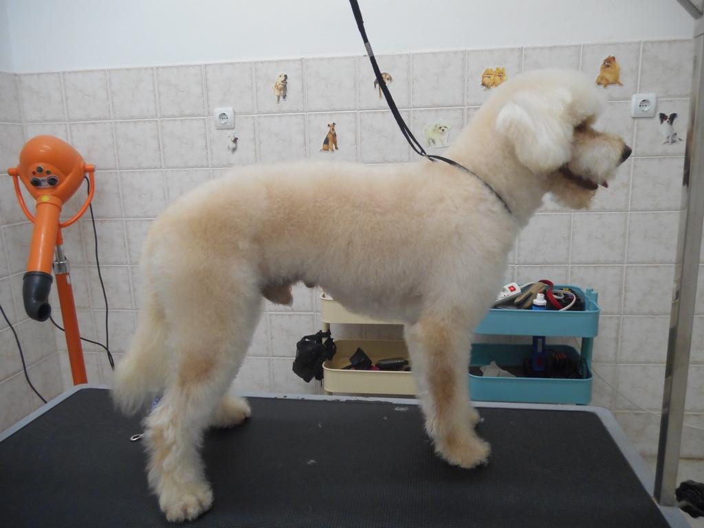 Κούρεμα σκύλου