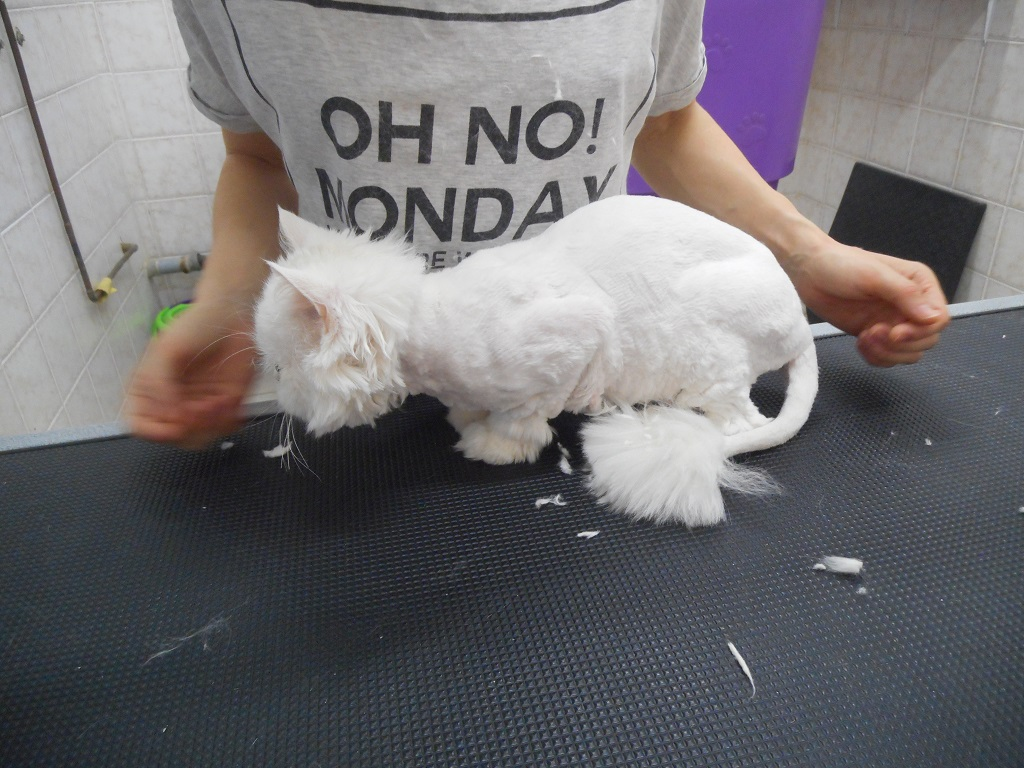 Grooming Γάτας